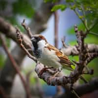 The Lil' Sparrow story stories