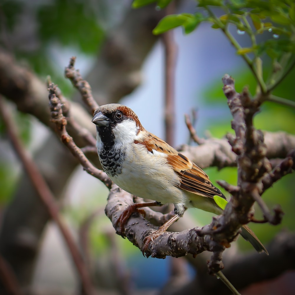 brown and white bird on tree branch