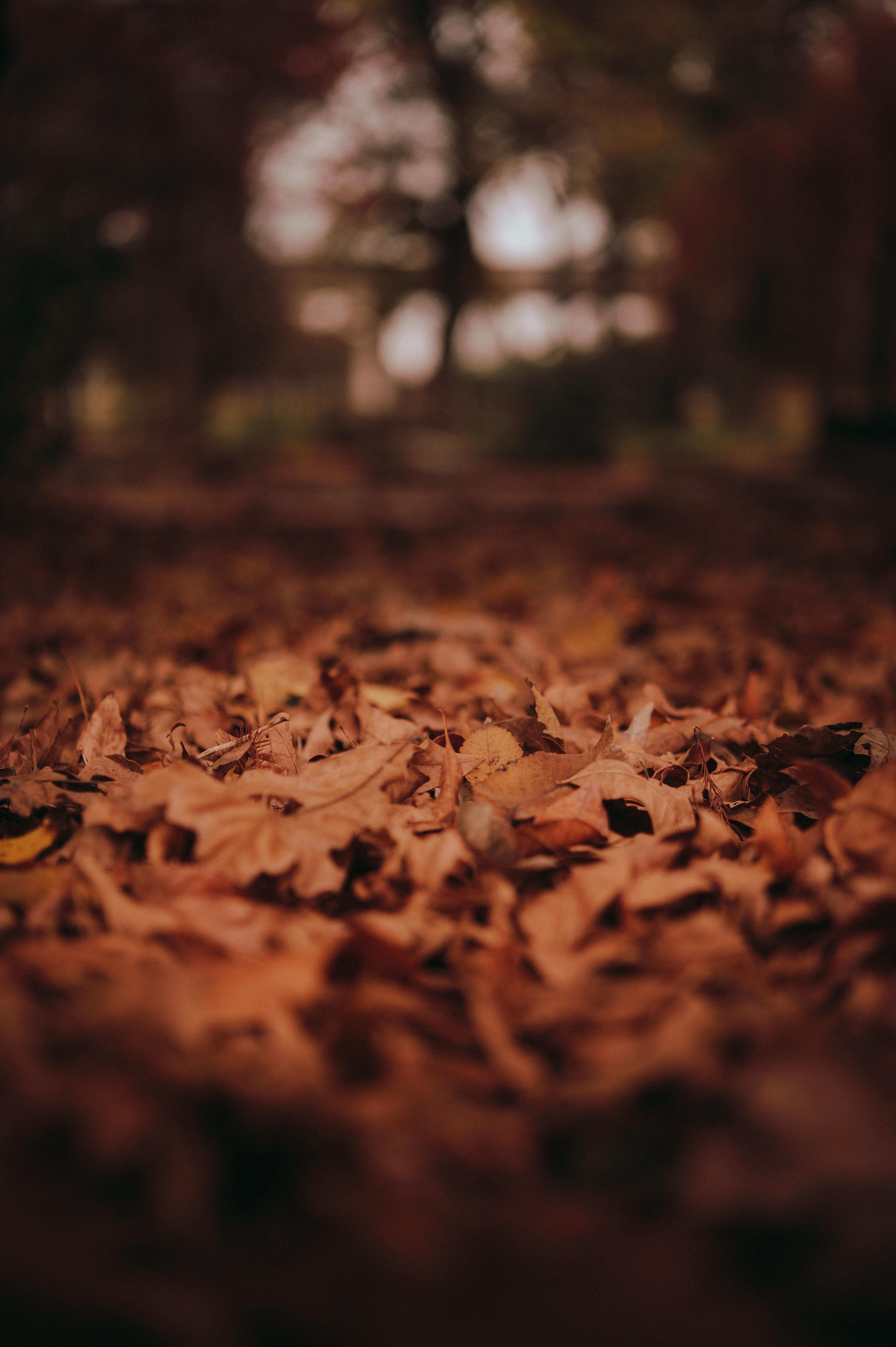 brown-dried-leaves-on-ground