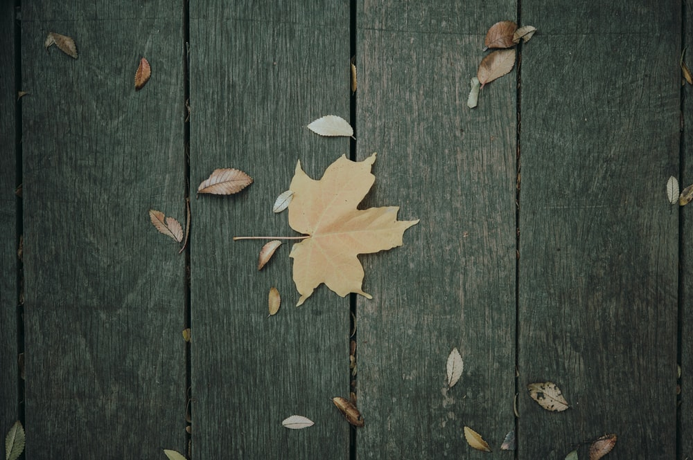 yellow maple leaf on brown wooden surface