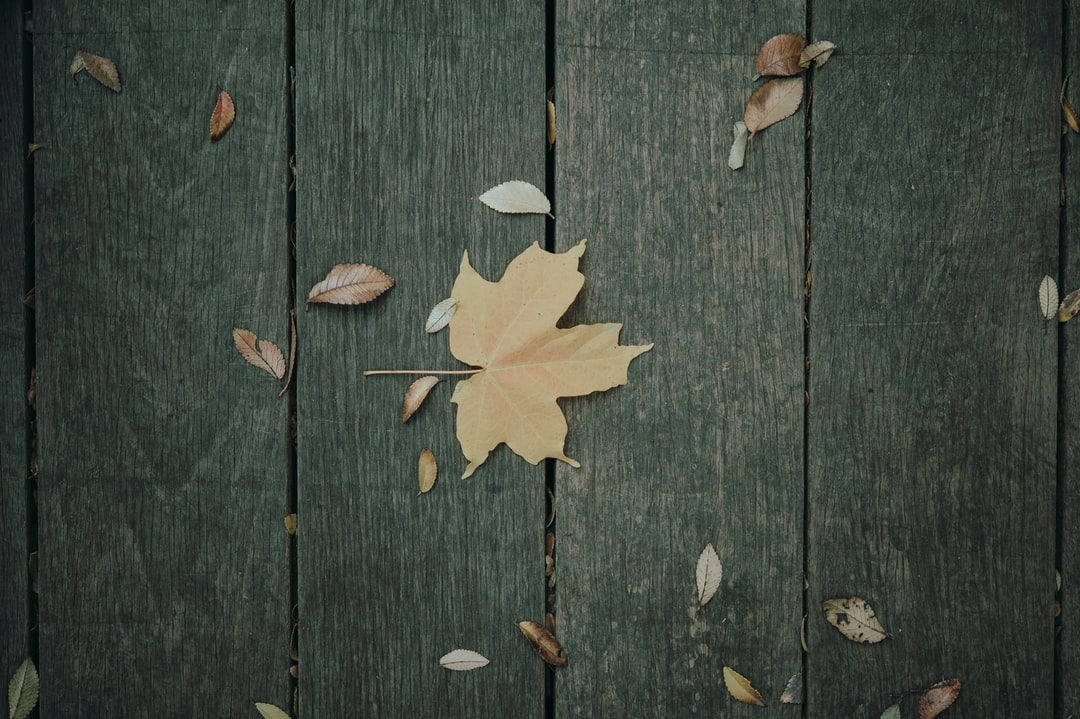 Yellow Maple Leaf On Brown Wooden Surface - unsplash