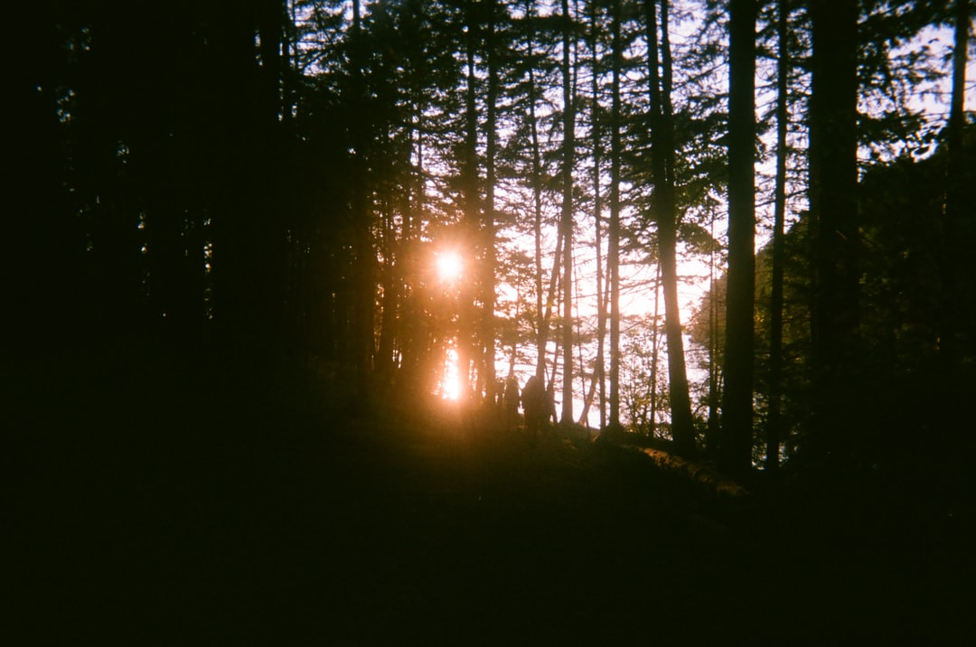 Sun Setting Over the Forest - unsplash