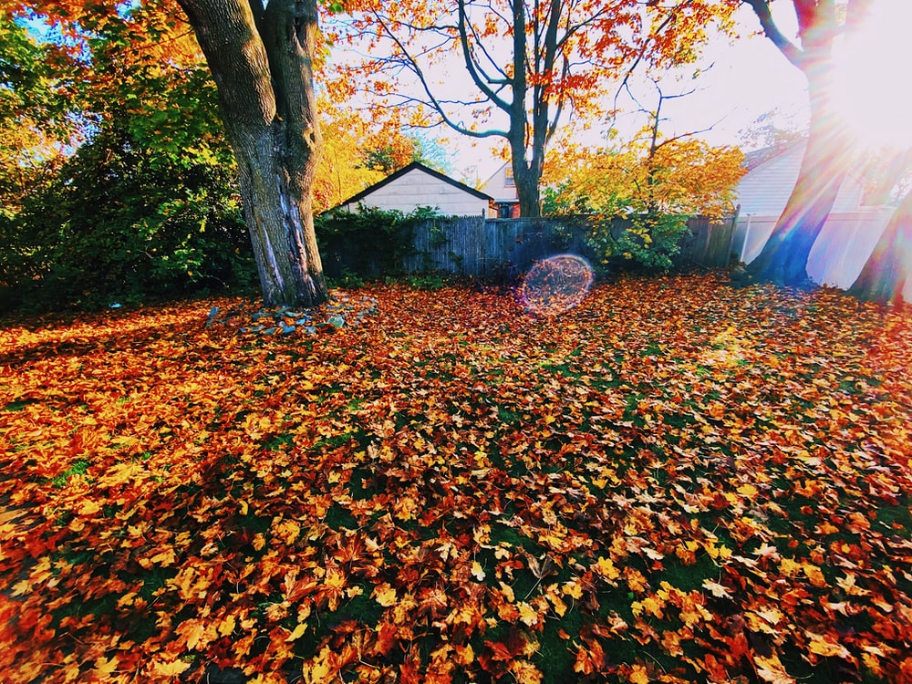 brown tree with yellow leaves on ground