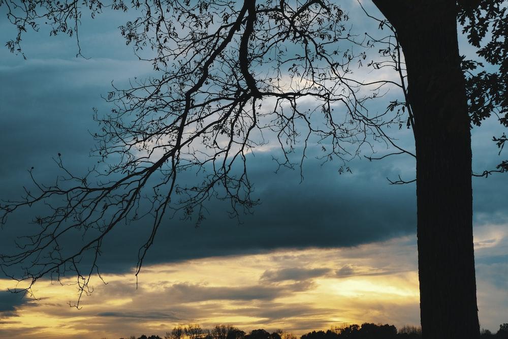 leafless tree under blue sky during sunset