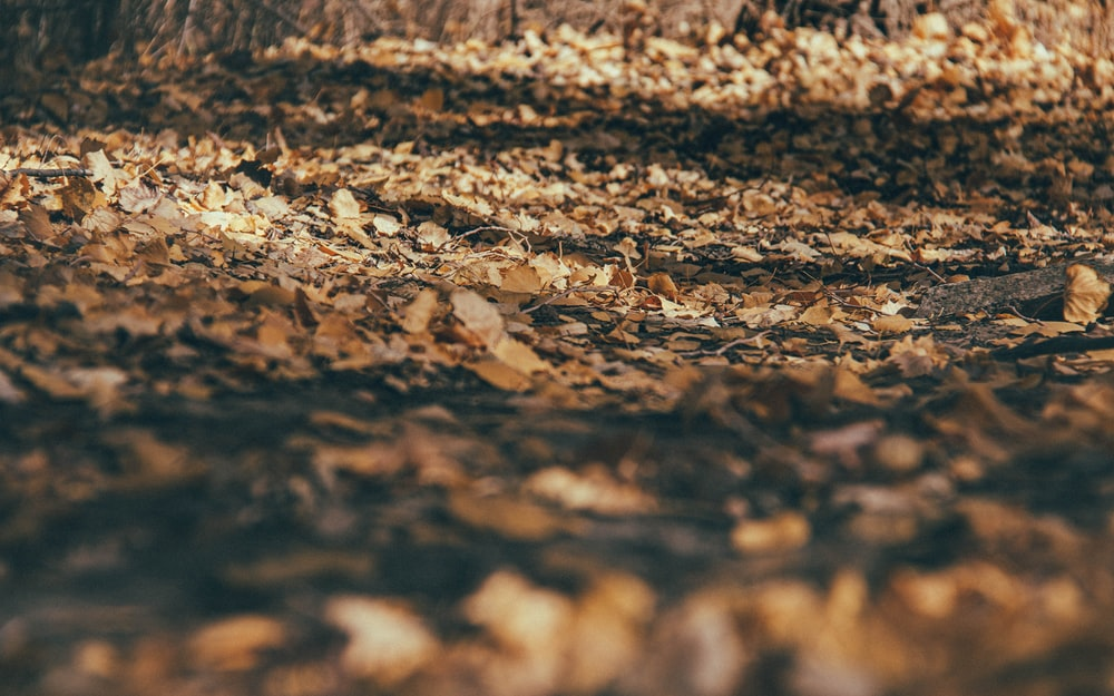 brown dried leaves on ground