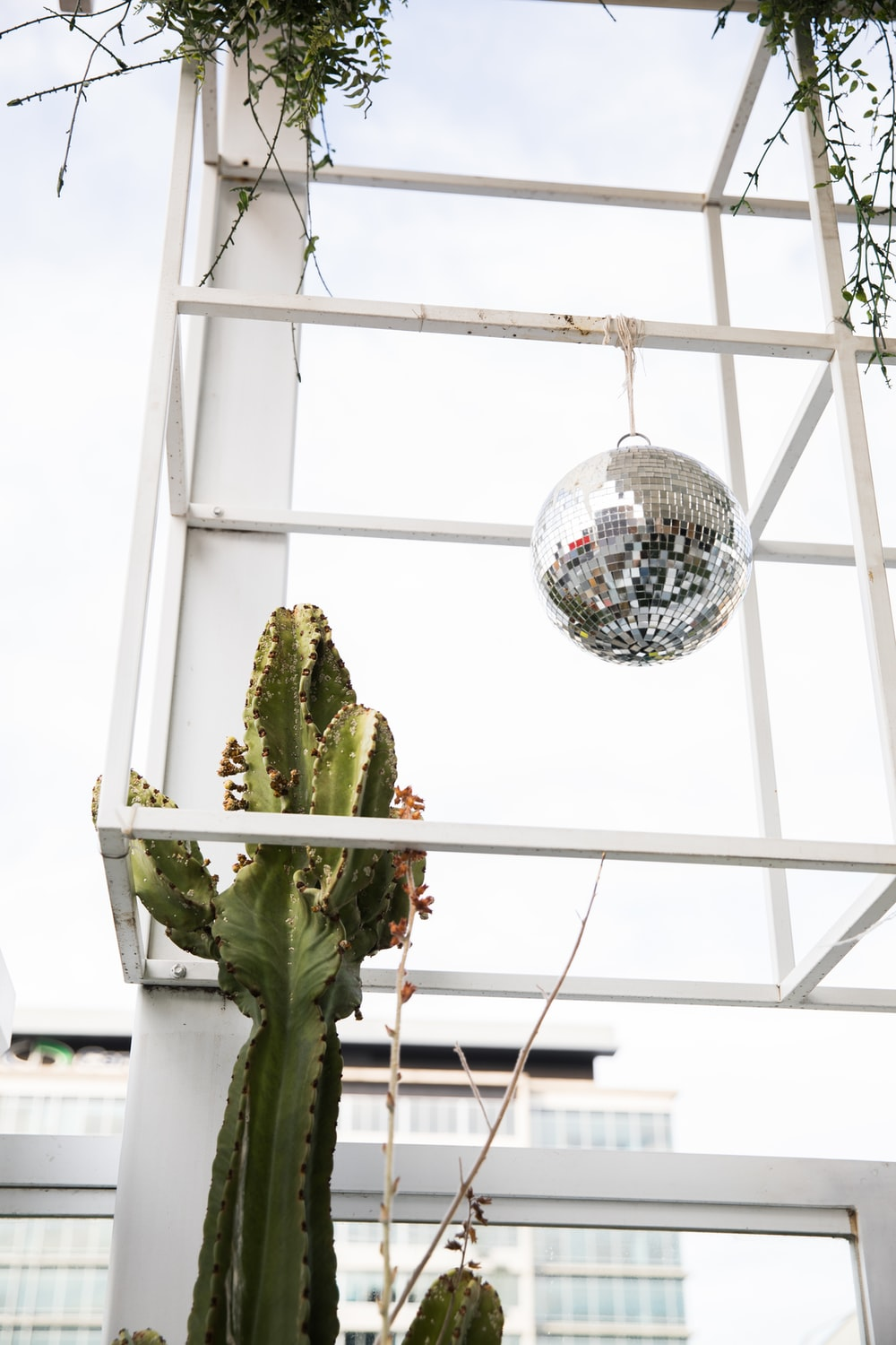 green cactus on white metal cage