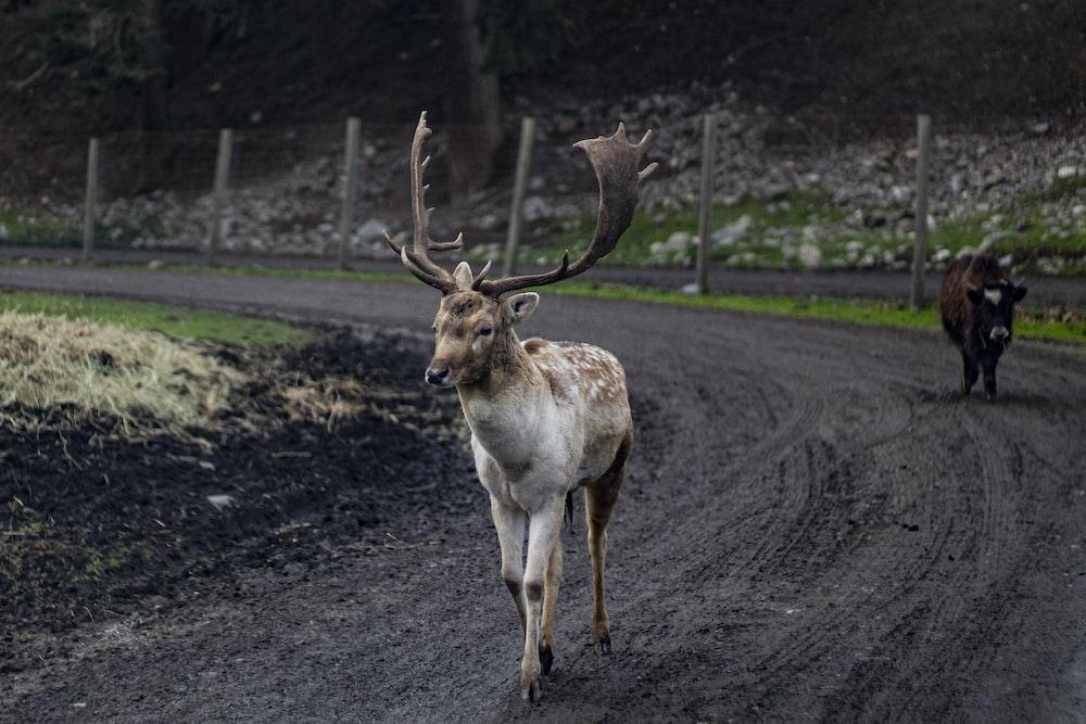 brown deer on road during daytime