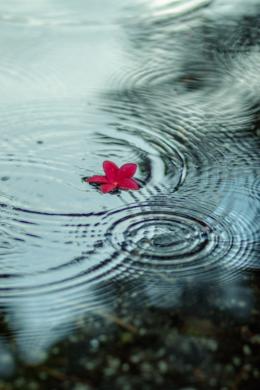 red flower on water during daytime