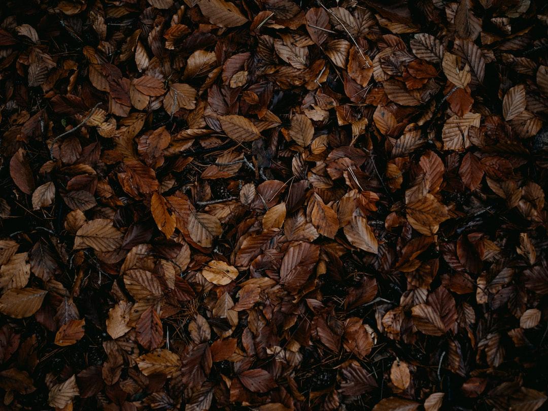 Brown Dried Leaves On Ground - unsplash