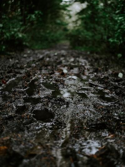 water droplets on black soil