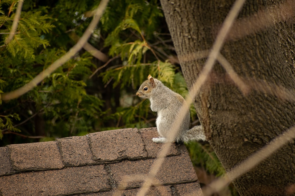 gray squirrel on brown concrete wall during daytime