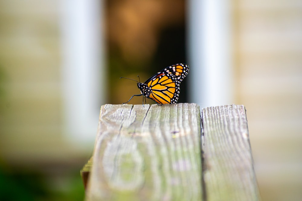 monarch butterfly perched on brown wooden fence during daytime