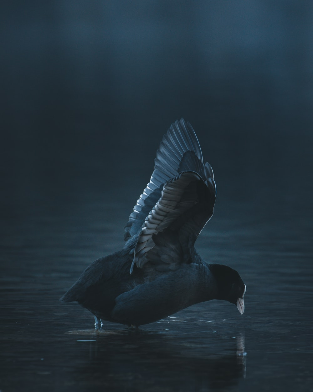 black and white bird flying over body of water