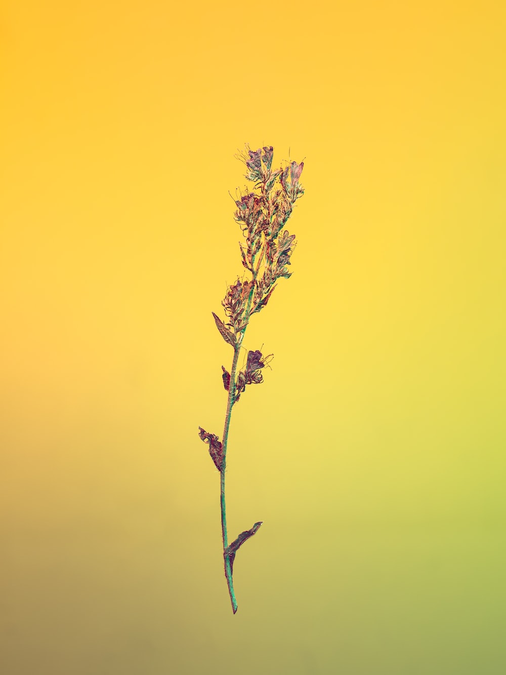 brown plant under yellow sky