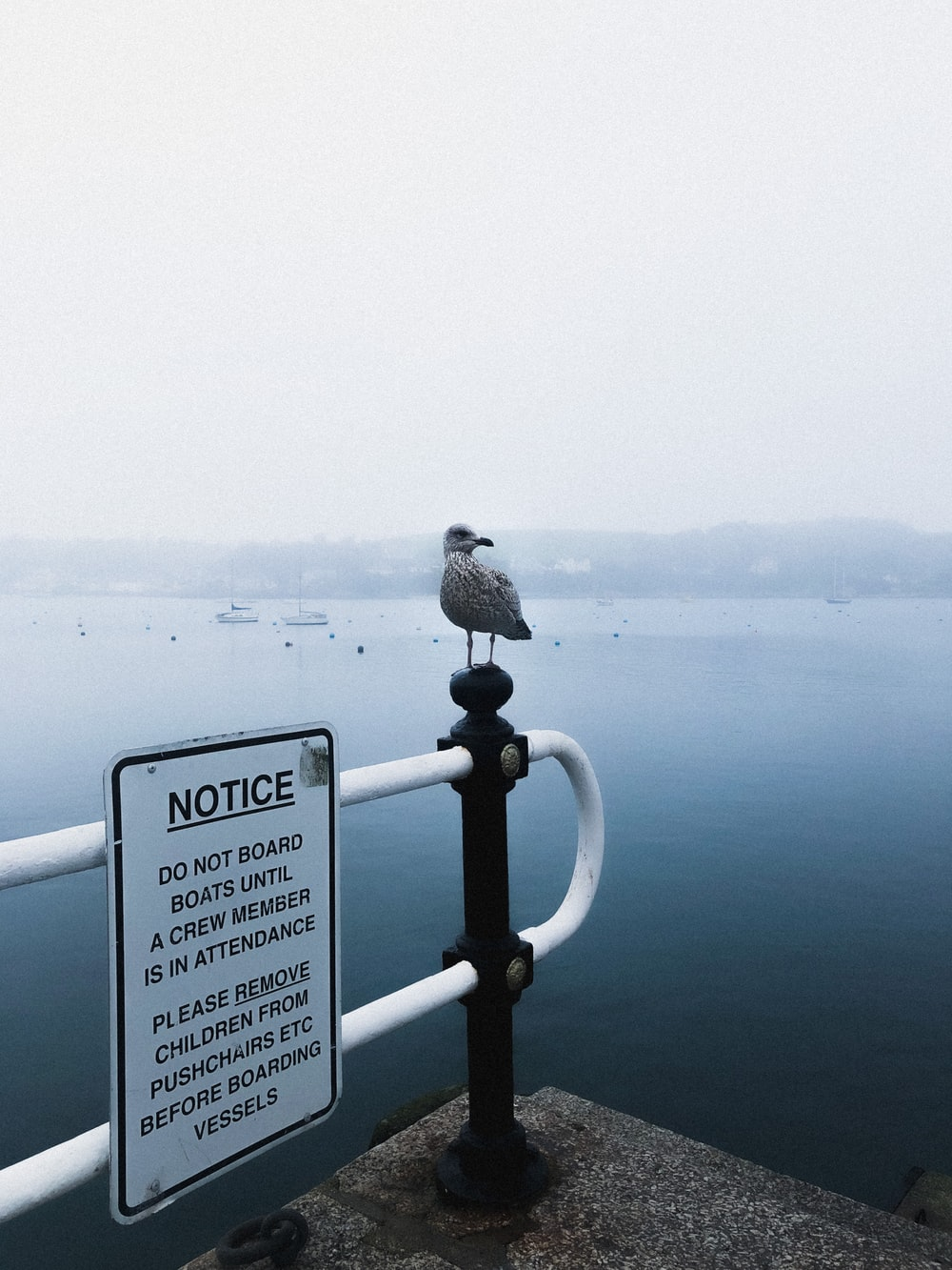 bird perched on white metal railings near body of water during daytime