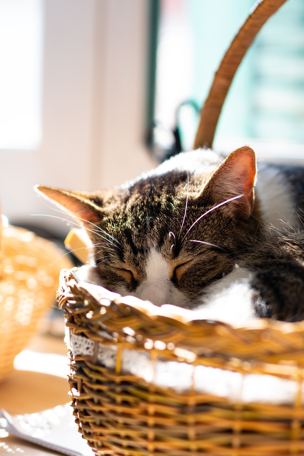 brown tabby cat on brown woven basket