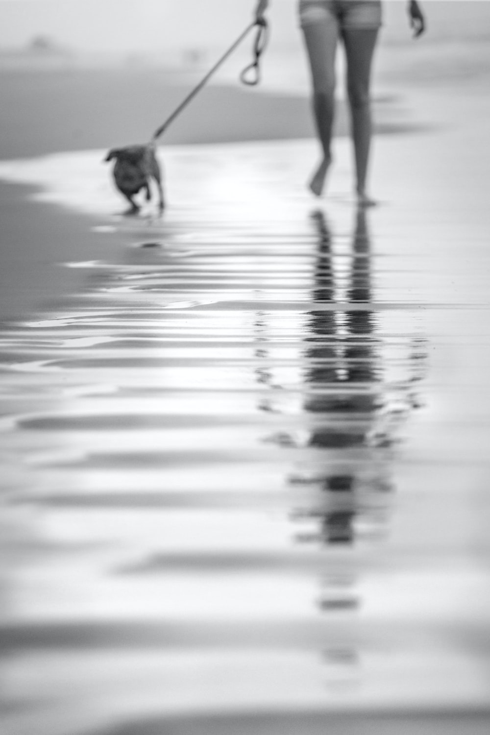 silhouette of people walking on wet ground