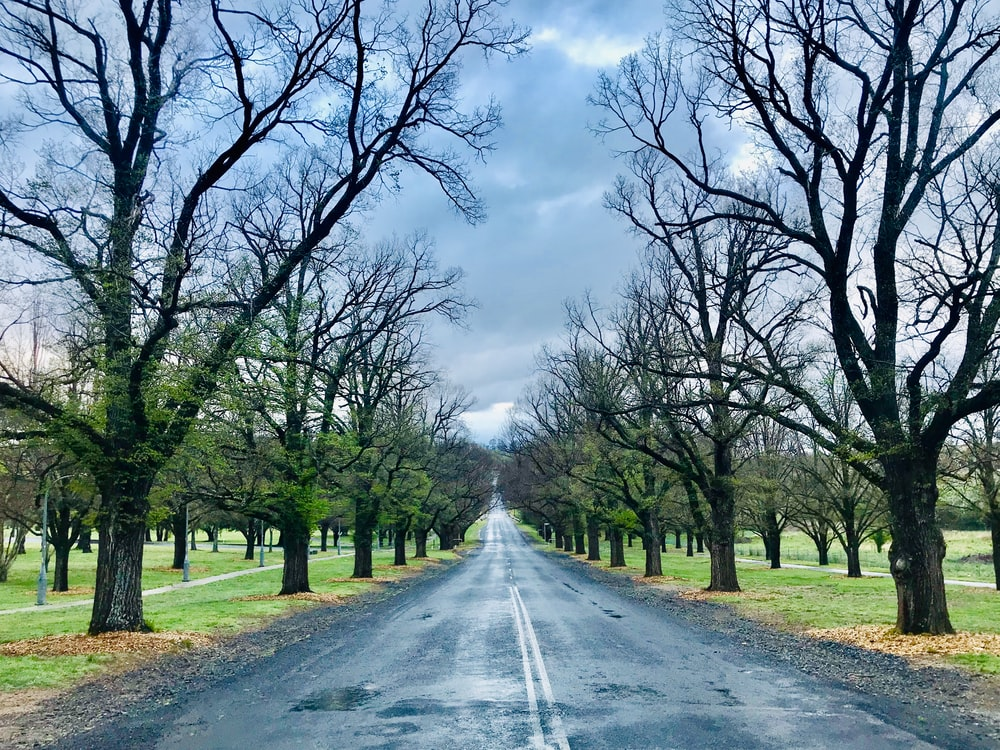 gray asphalt road between green trees under white clouds and blue sky during daytime