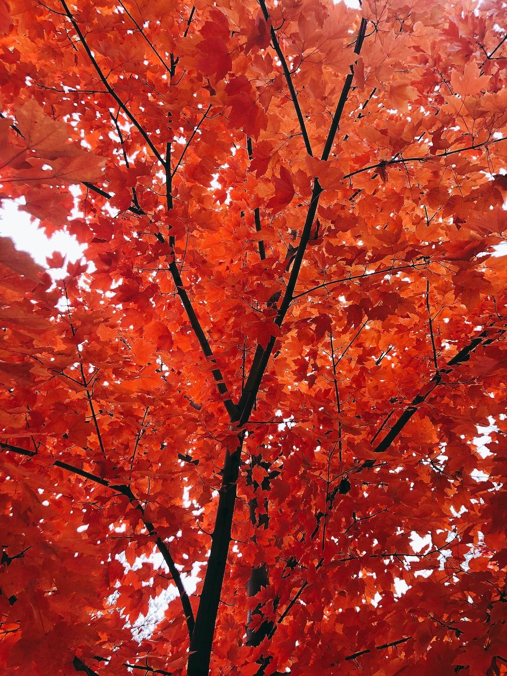 brown leaves tree during daytime