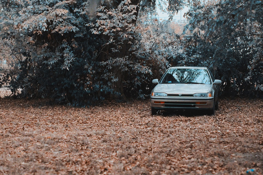 blue car parked on brown dried leaves during daytime