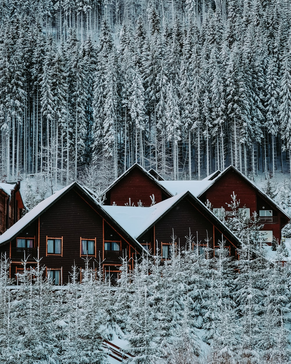 brown wooden house in the middle of snow covered forest