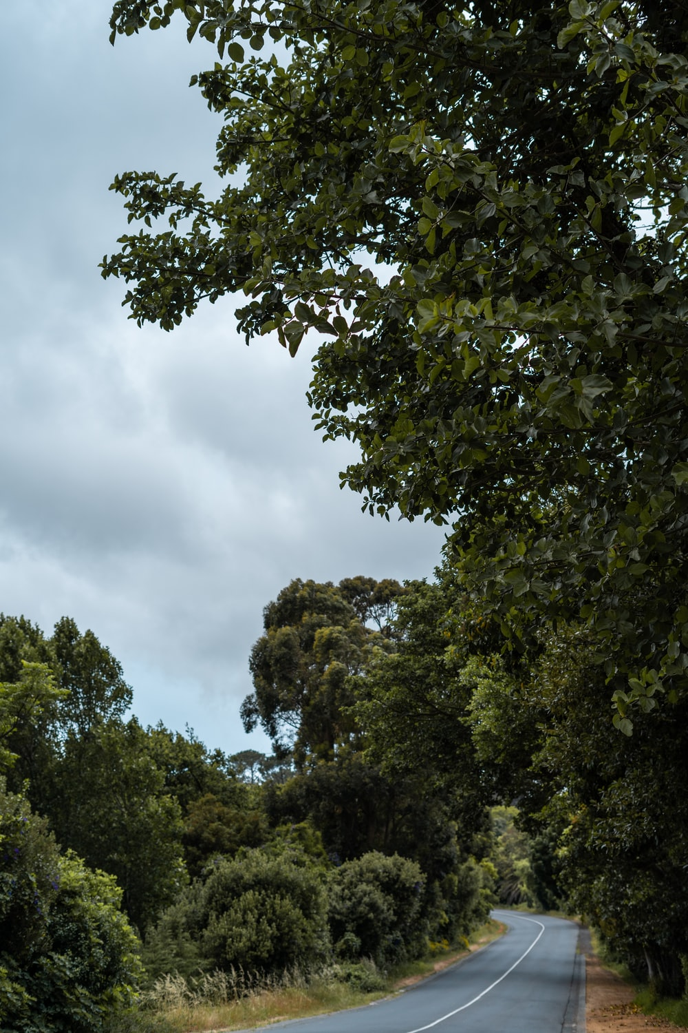 green trees under white clouds during daytime