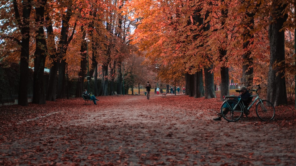 people walking on brown pathway surrounded by brown trees during daytime