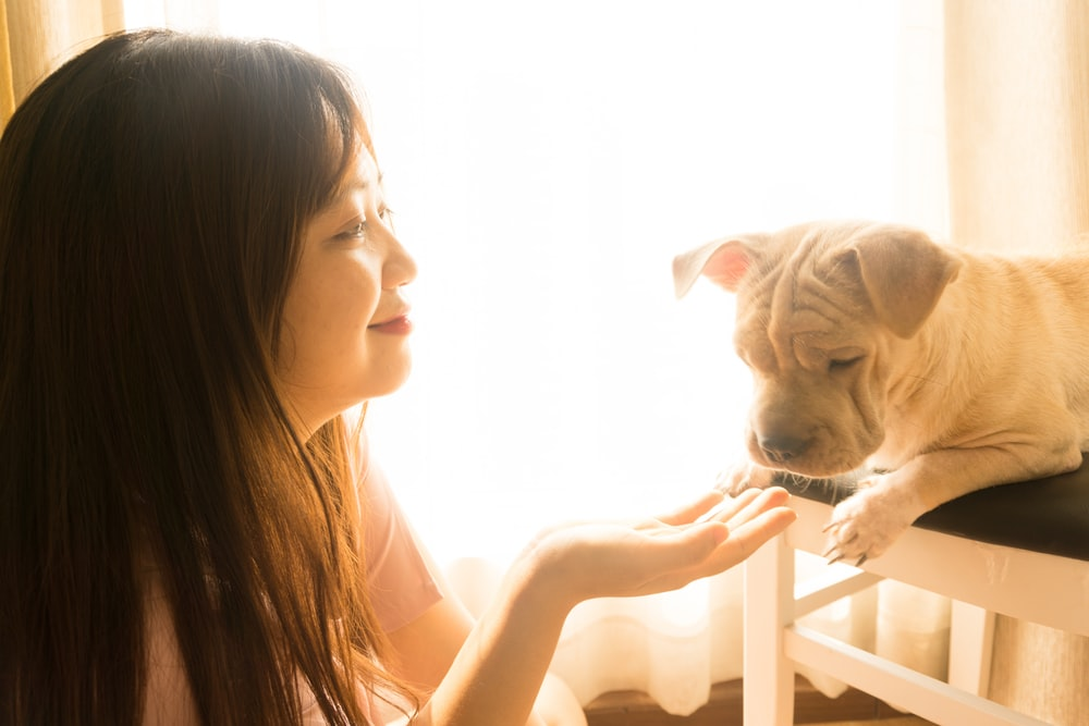 woman in black tank top hugging white short coated dog