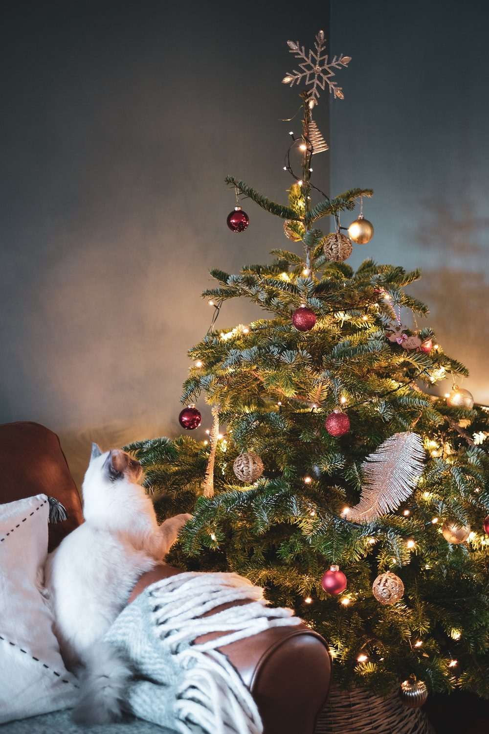white and brown cat on white textile beside green christmas tree