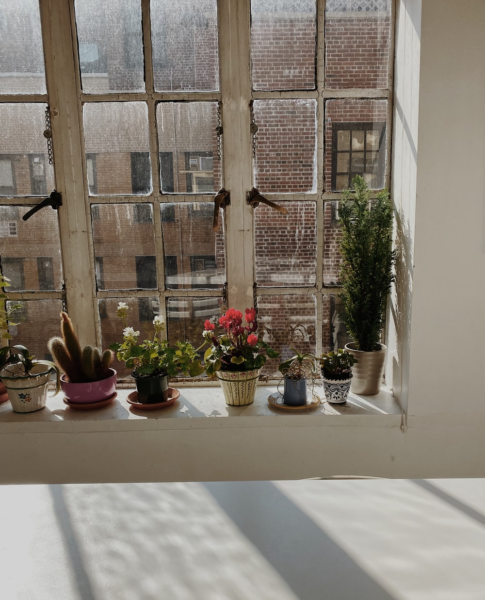 green potted plants on window