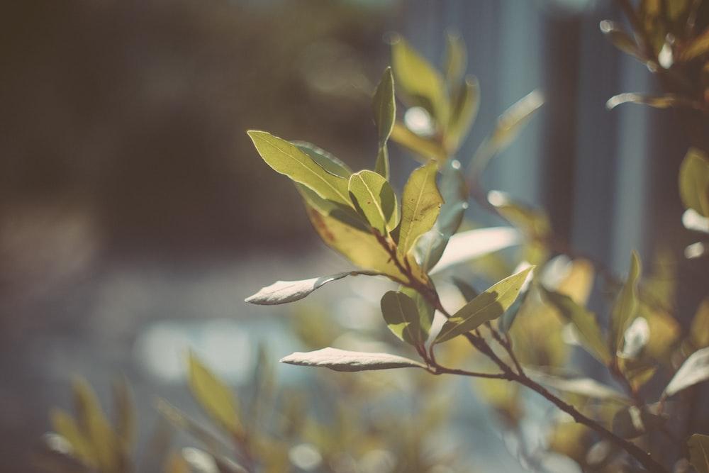 green leaf in tilt shift lens