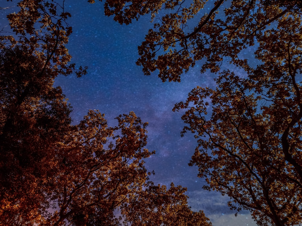 brown leaf trees under blue sky