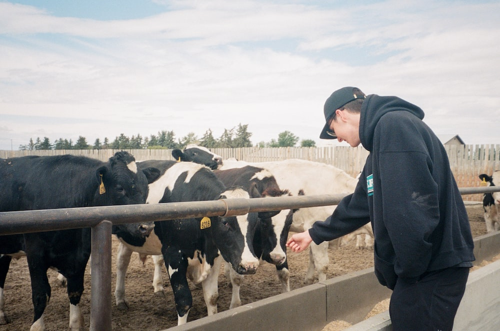 man in black jacket standing beside white and black cow during daytime