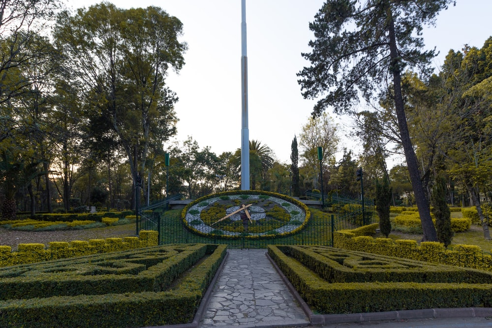 green and yellow garden during daytime