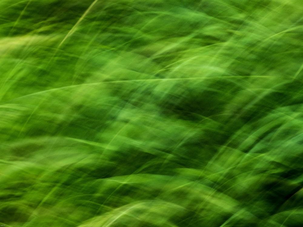 green and white light digital wallpaper