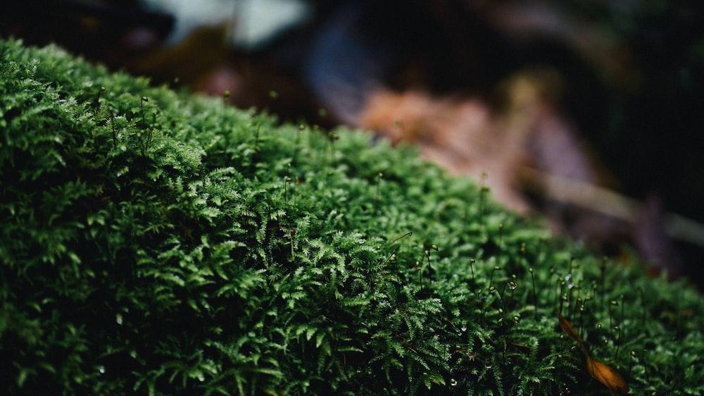 green moss on brown soil