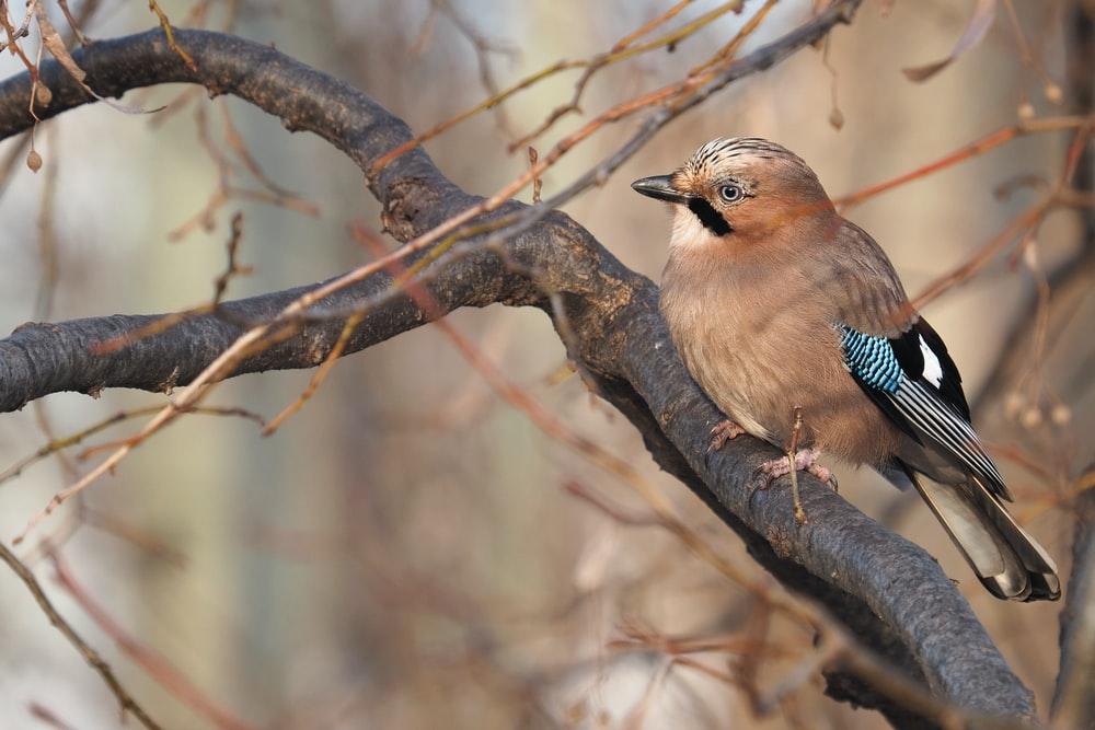 blue and brown bird on brown tree branch during daytime