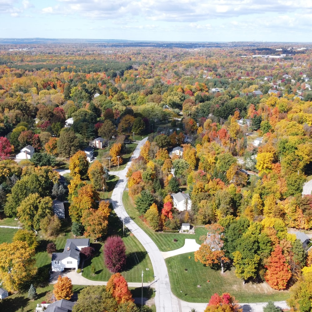 aerial view of green trees and plants during daytime