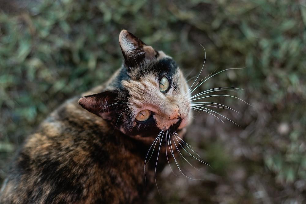brown tabby cat in tilt shift lens