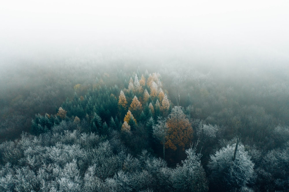green and brown trees covered with snow