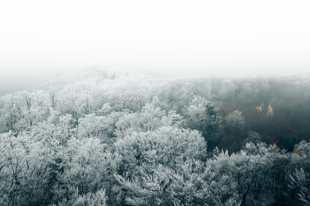 green trees covered with white fog