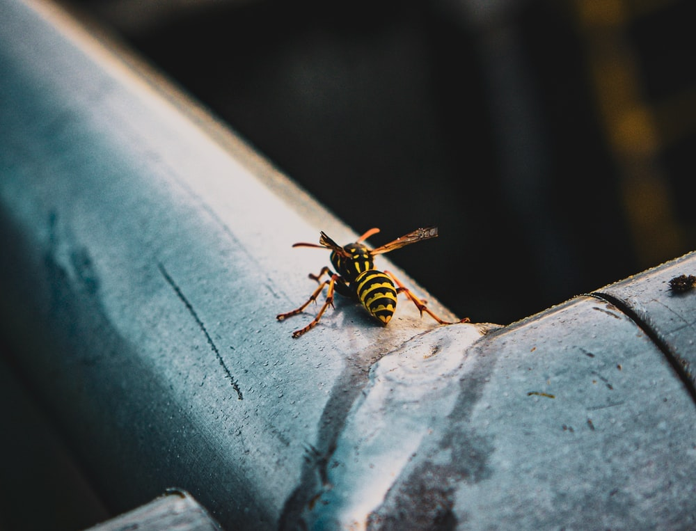 black and yellow bee on white concrete