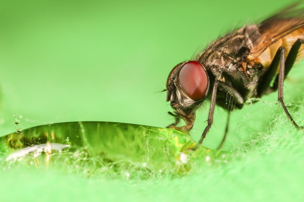 black fly perched on green leaf in close up photography during daytime