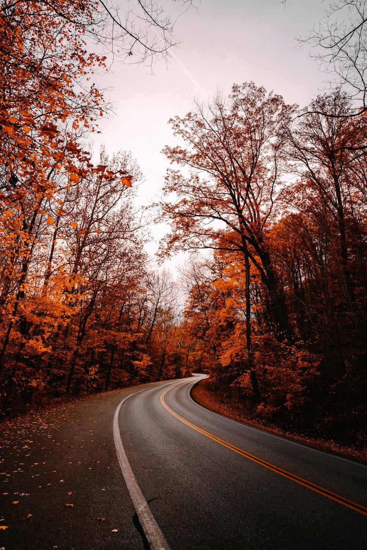 gray asphalt road between brown trees during daytime