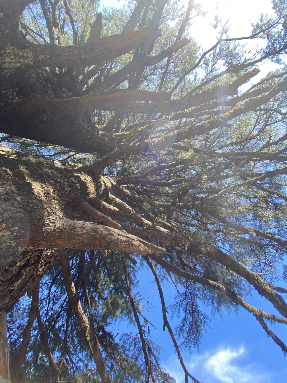 brown tree trunk under blue sky during daytime