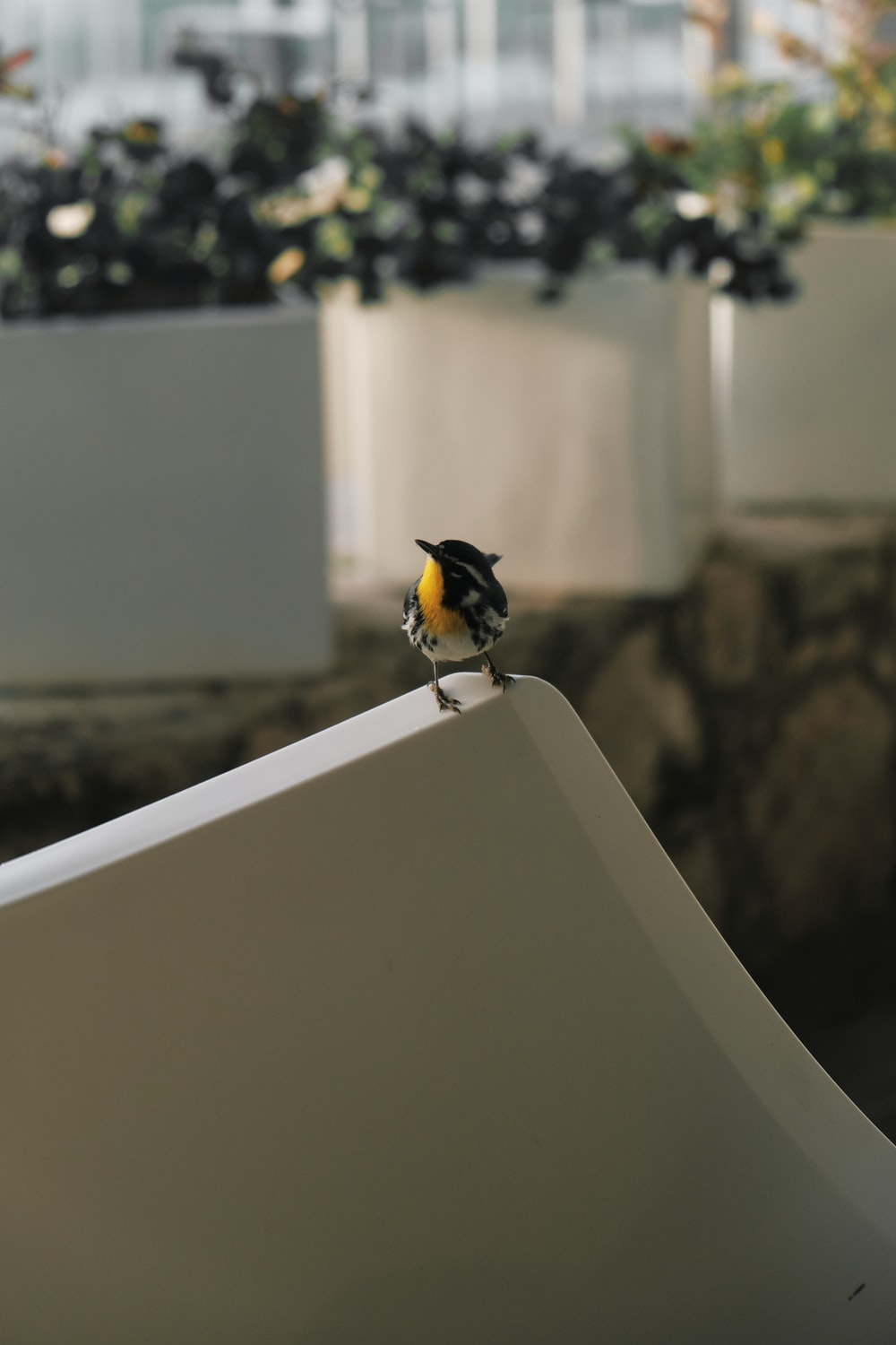black and yellow bird on white concrete wall during daytime