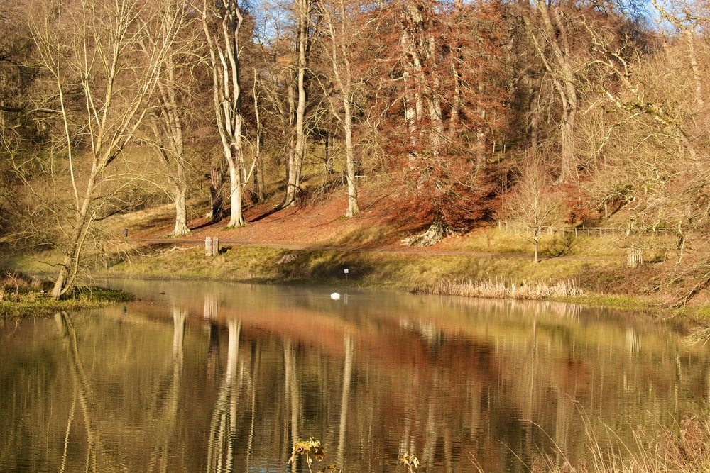 brown trees beside river during daytime