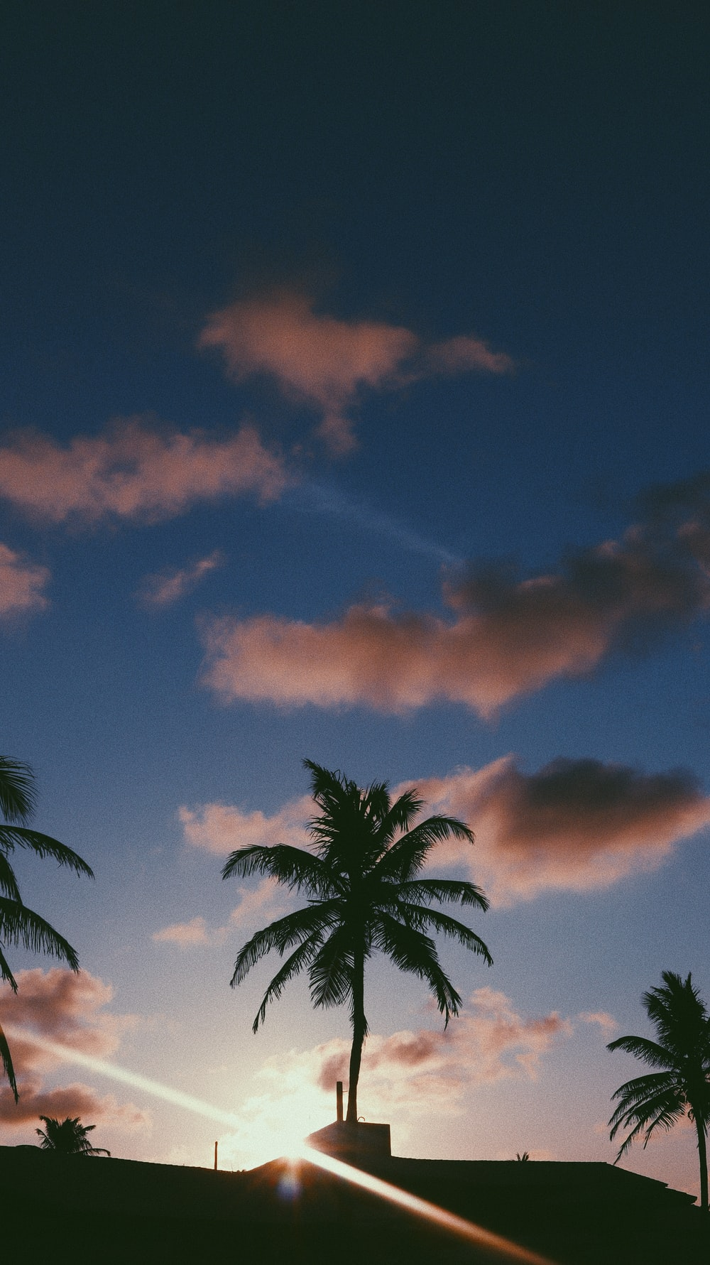 palm tree under orange and blue sky