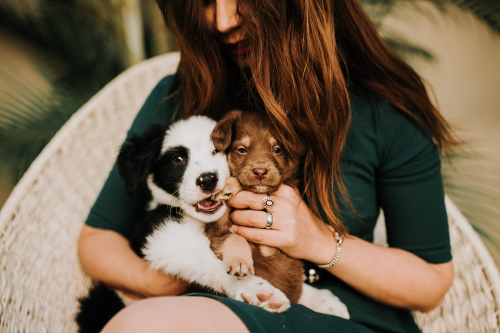 woman in black tank top holding black and white short coated small dog