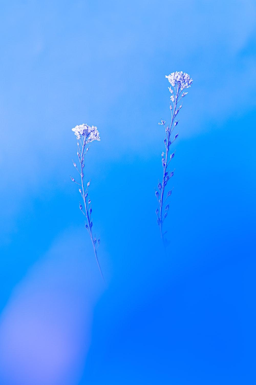 white flower in green background
